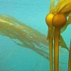 P1020565 oil.jpg