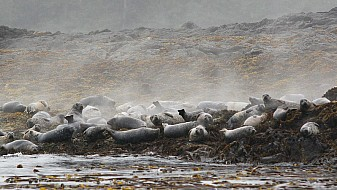 Seals on Mazzaredos
