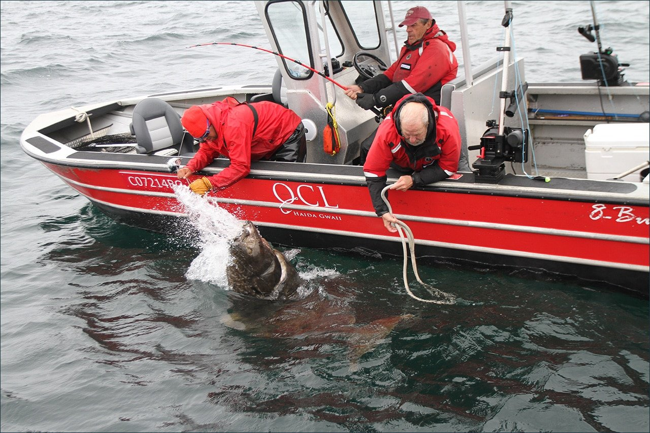 Our halibut record is really broken this time the halibut returned to her place down below and the men left with memories and a story to share for the rest of their days nvjuhfo Image collections