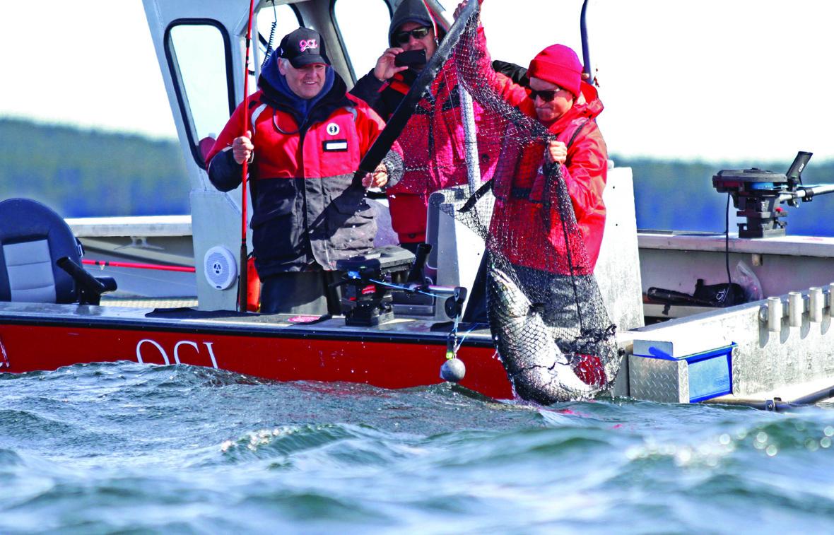 British Columbia Salmon Fishing Trips group of men reeling in salmon