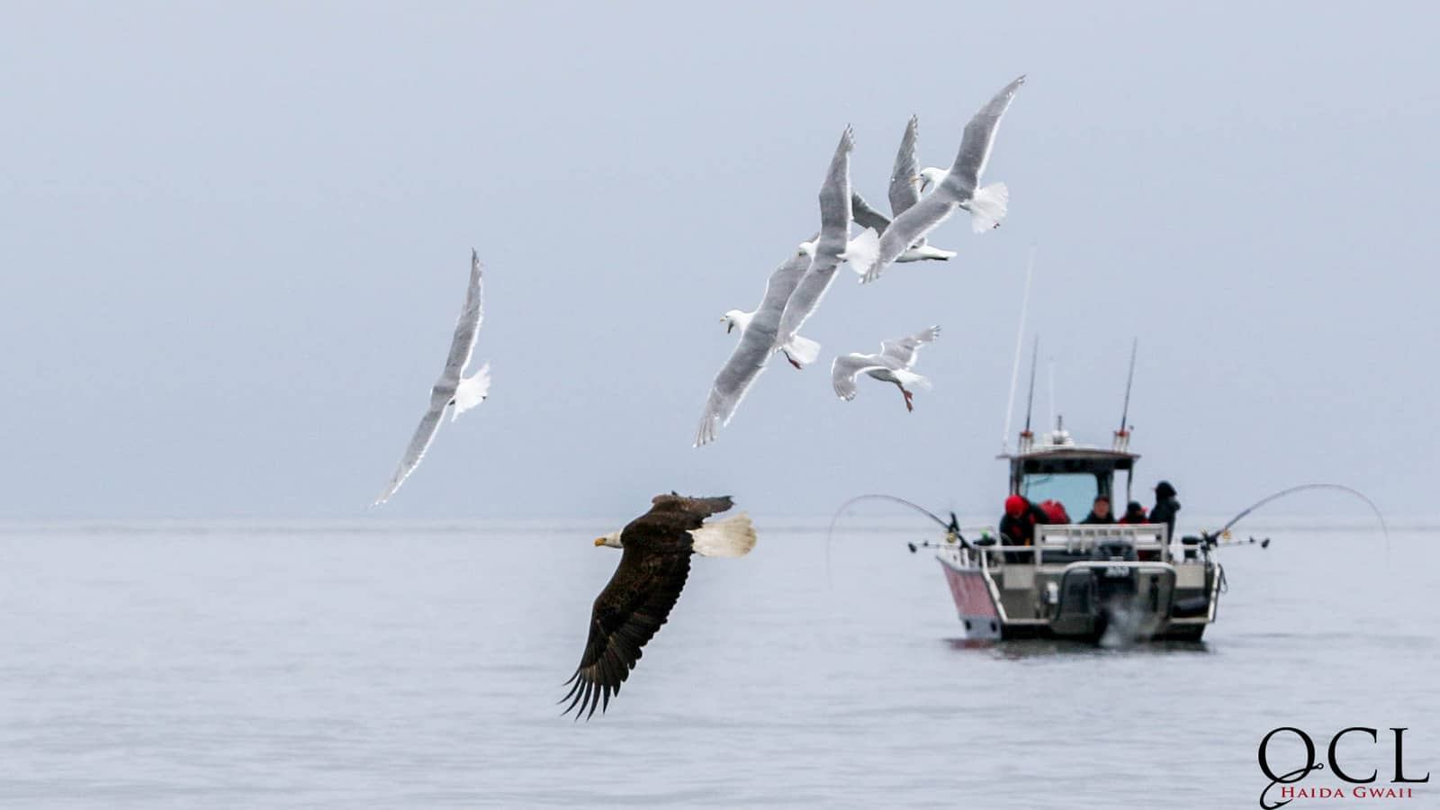 Eagle soaring above the ocean