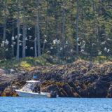 QCL Haida Gwaii Fishing